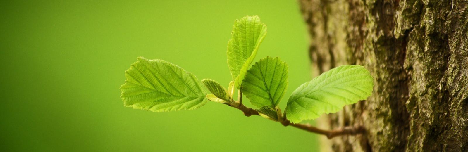 Tree Preservation Order