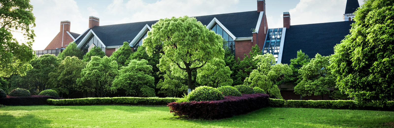 Pre-purchase tree survey – Home buyers arboricultural report