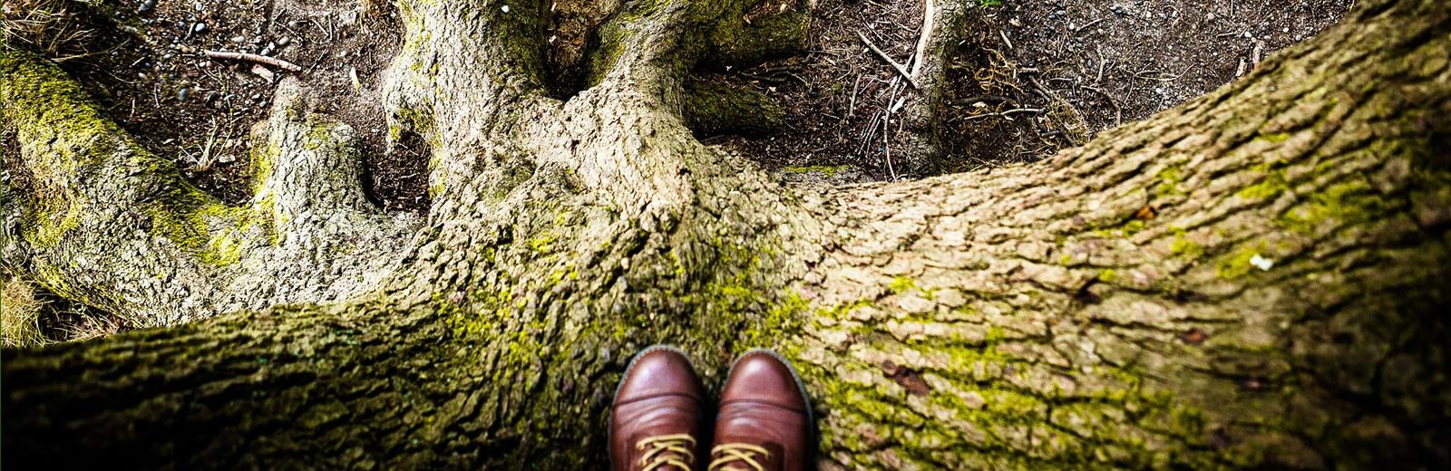 Veteran Tree Surveys - Veteran Tree Inspections